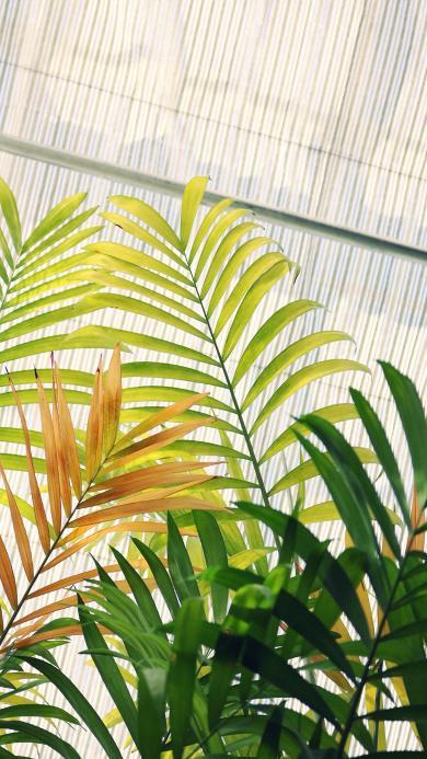 绿植 观赏性 生长 枝叶