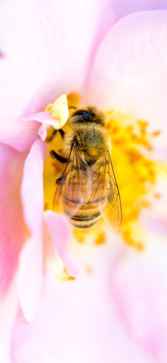 昆蟲 蜜蜂 花朵 花蕊 采蜜