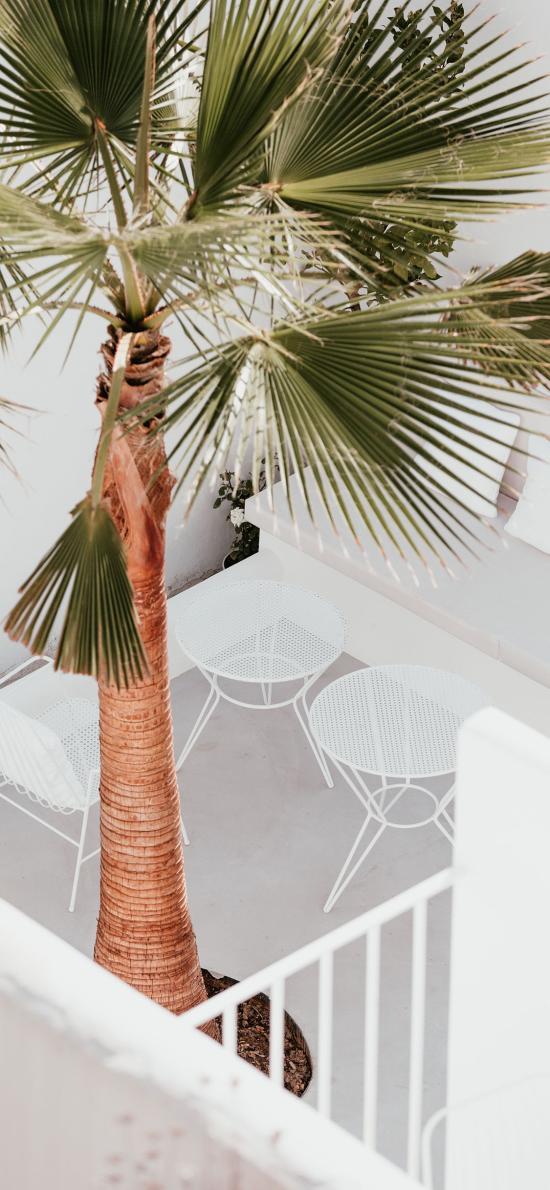 棕榈 树木 观赏 绿化