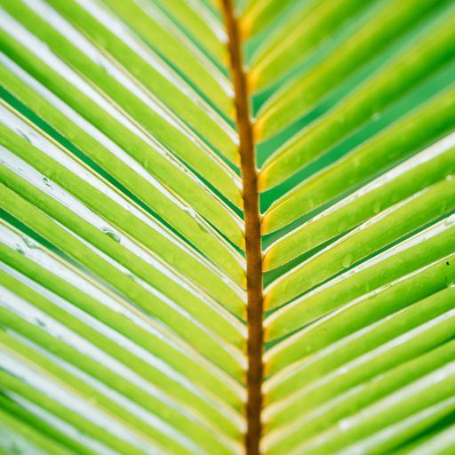 棕榈树 树叶 绿化 观赏
