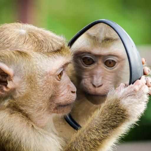镜子 后视镜 猴子 可爱
