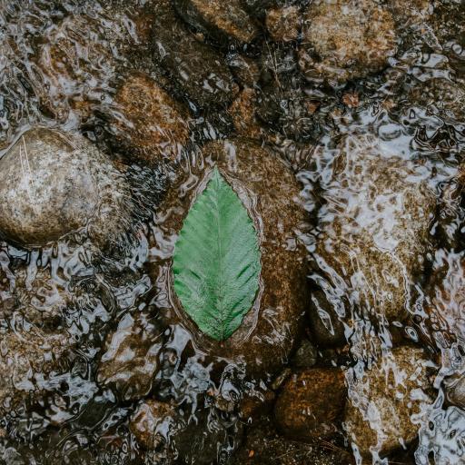 绿叶 落叶 流水 漂浮