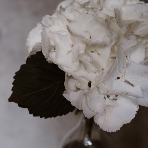 鲜花 花瓣 盛开 特写