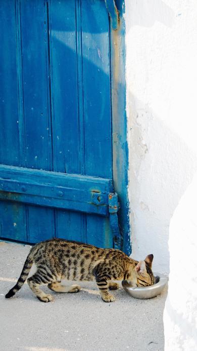宠物猫 花猫 猫咪 进食