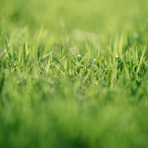 郊外 草丛 嫩绿 护眼