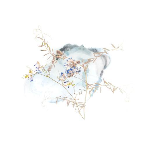 鲜花 植物 标本 清新