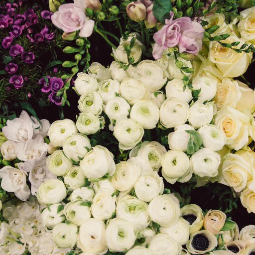 鲜花 花苞 密集 种类