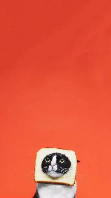 猫咪 可爱 喵星人 萌 可爱 面包片 橘色