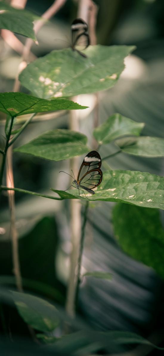 蝴蝶 昆蟲 枝葉 翅膀