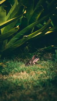 兔子 草地 掩藏 绿植