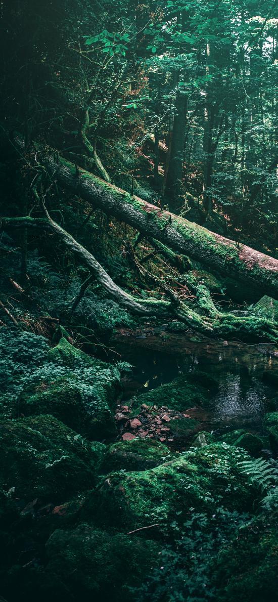森林 树林 树木 苔藓 水潭