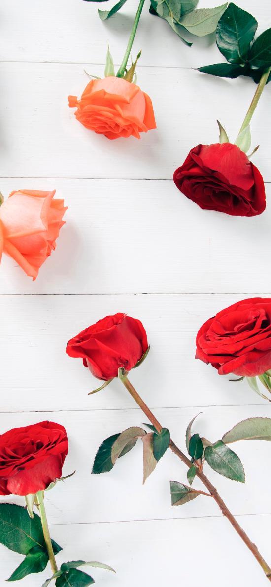 玫瑰 鲜花 花朵 花苞