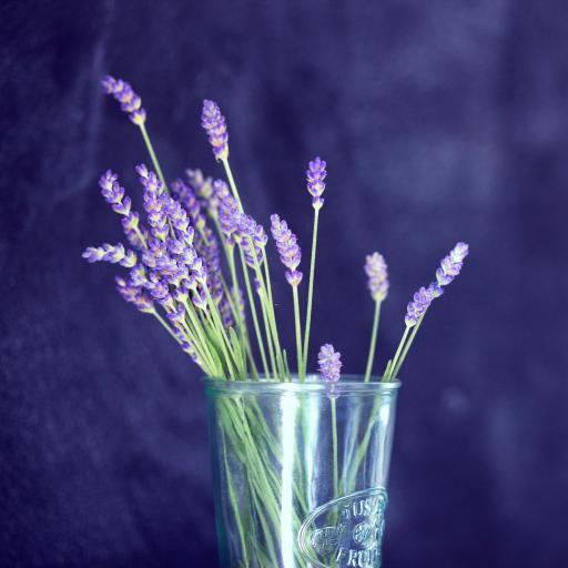 花瓶 薰衣草 紫色 插花
