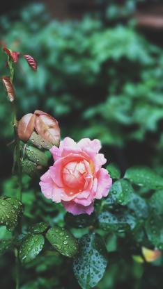 鲜花 枝叶 绿植 花苞