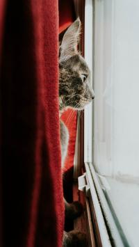 猫咪 窗户 凝望 躲藏