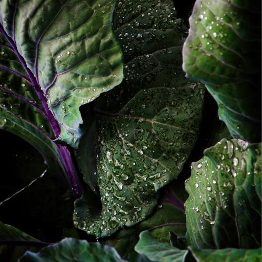 绿叶 雨水 水珠 紫茎