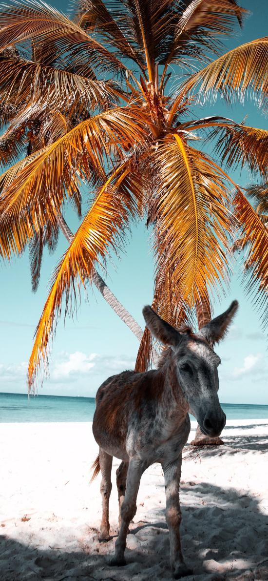 驴 海边 沙滩 椰树