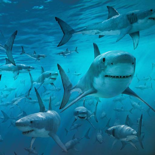鲨鱼 尖牙 海洋生物 凶猛 游泳