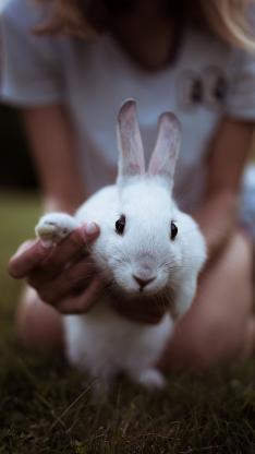 兔子 大白兔