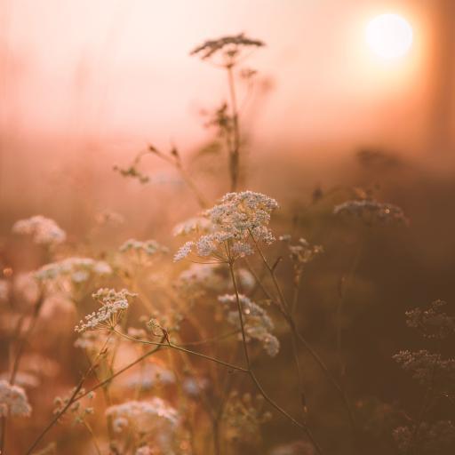 鲜花 白色 小清新 唯美