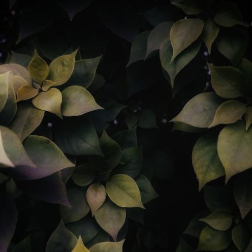 枝叶 生长 密集 绿叶 绿植