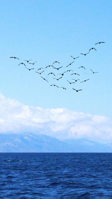 大海 鸟 蓝色 海面 蓝天