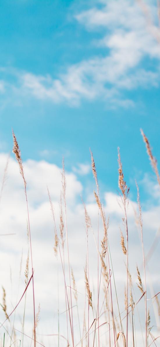 蓝天白云 荒草 晴天 郊外