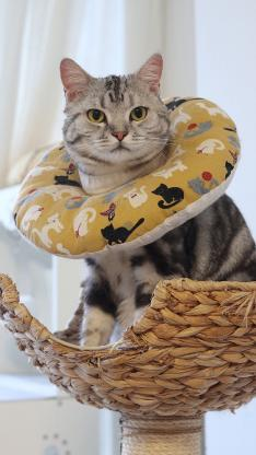 宠物 猫咪 围脖 可爱