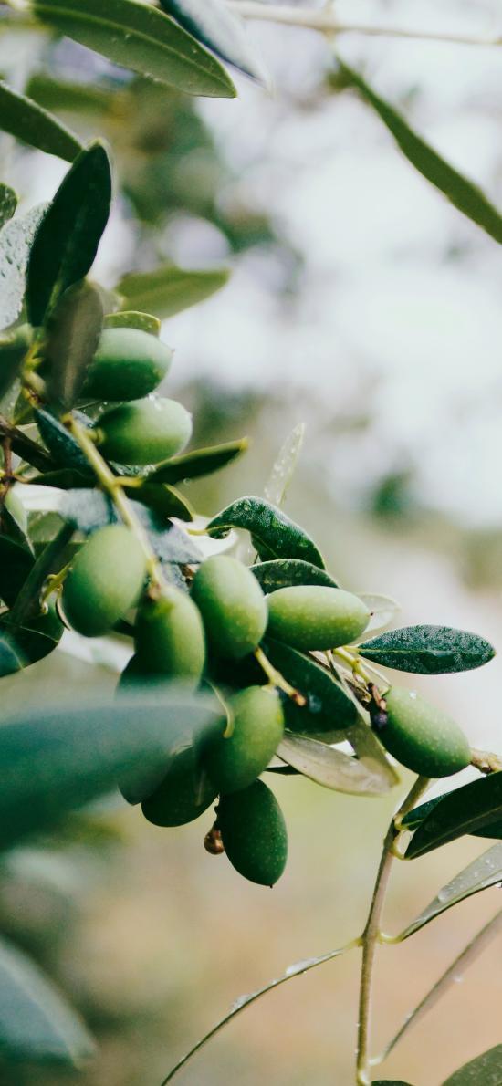 树木 枝叶 果实 绿化