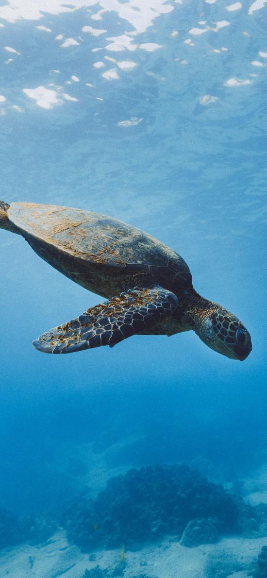 海龟 海底 大海 海洋