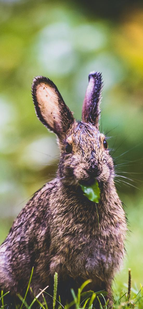 兔子 食草 草地 野兔