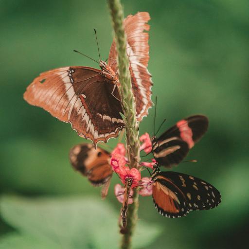 昆虫 蝴蝶 采蜜 聚集