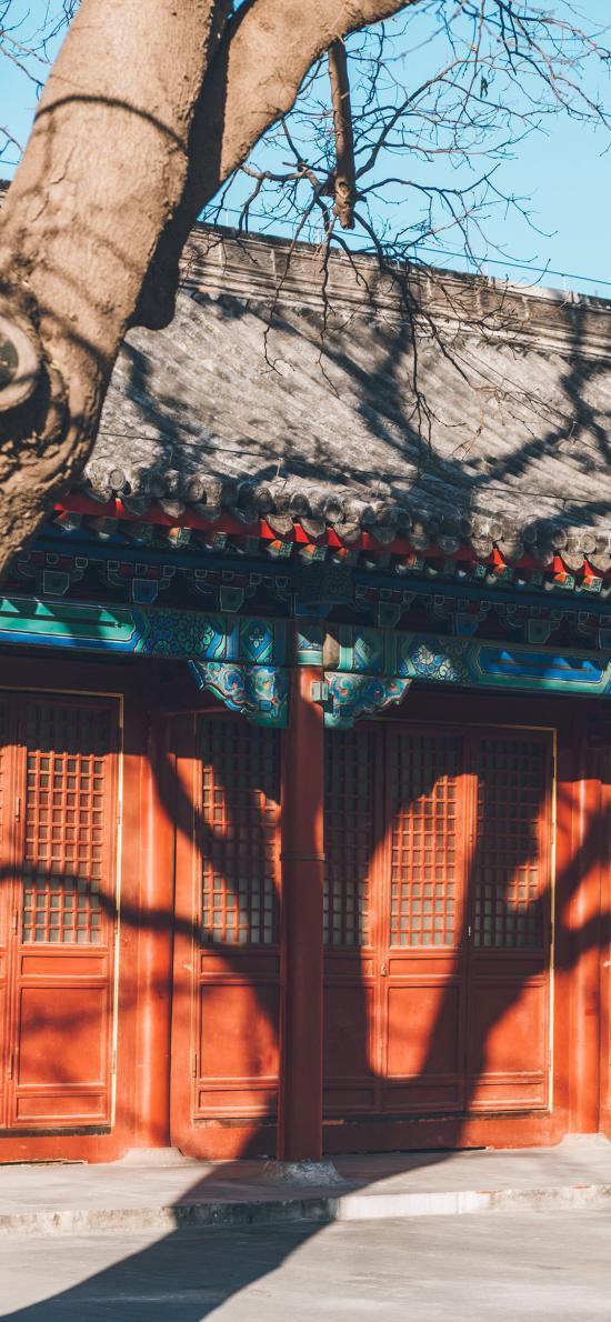故宫 院落 瓦片 树木 叶子