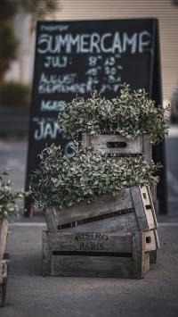 木箱 绿叶 装饰 绿化