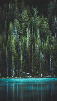 湖泊 宁静 树林 自然 美景