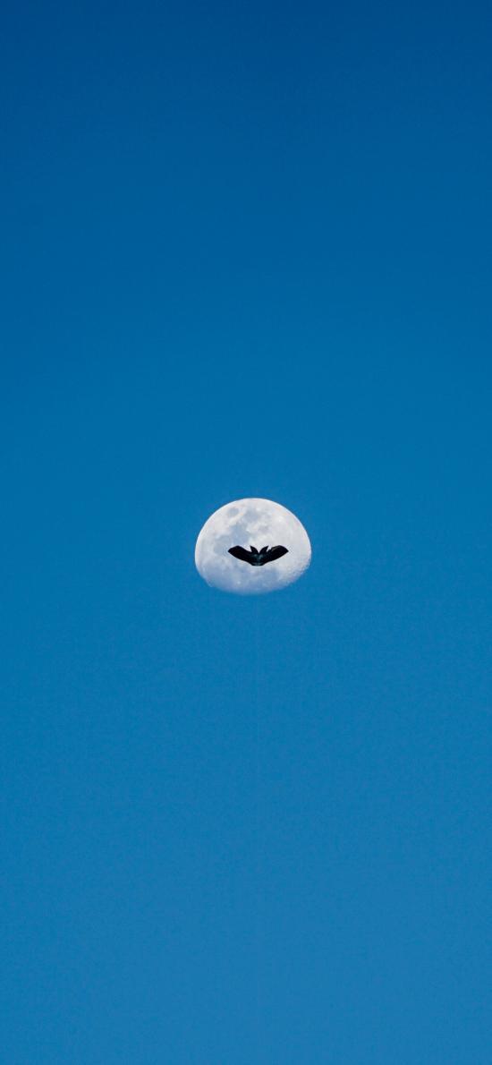 月亮 蔚蓝 飞鸟 星球