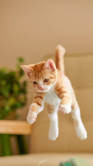 宠物 猫咪 橘猫 幼崽