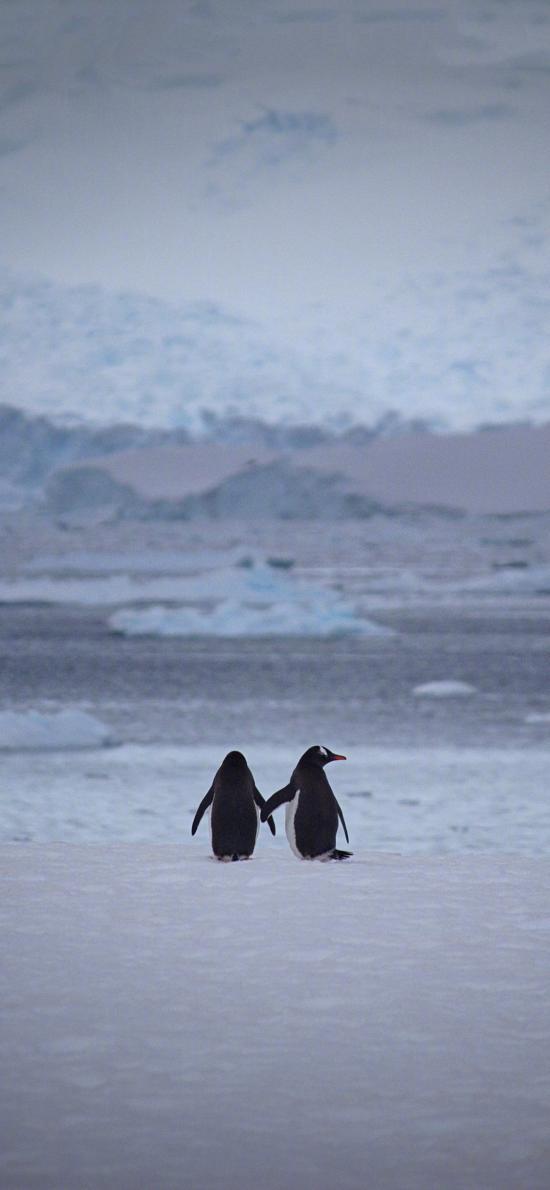 企鹅 背影 可爱 南极 寒冷