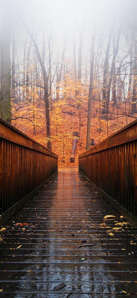 走廊 林木 枯葉 唯美