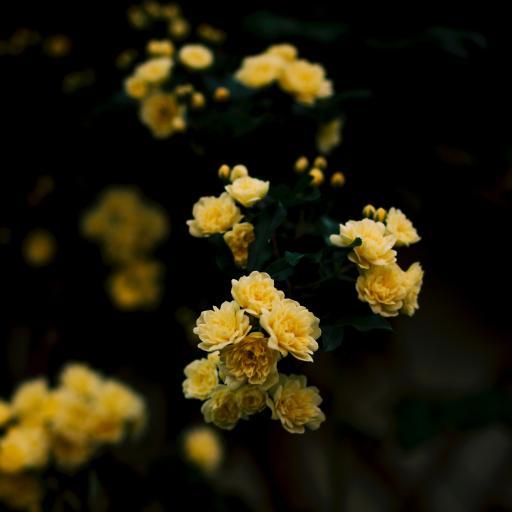 鲜花 花朵 黄色 绽放