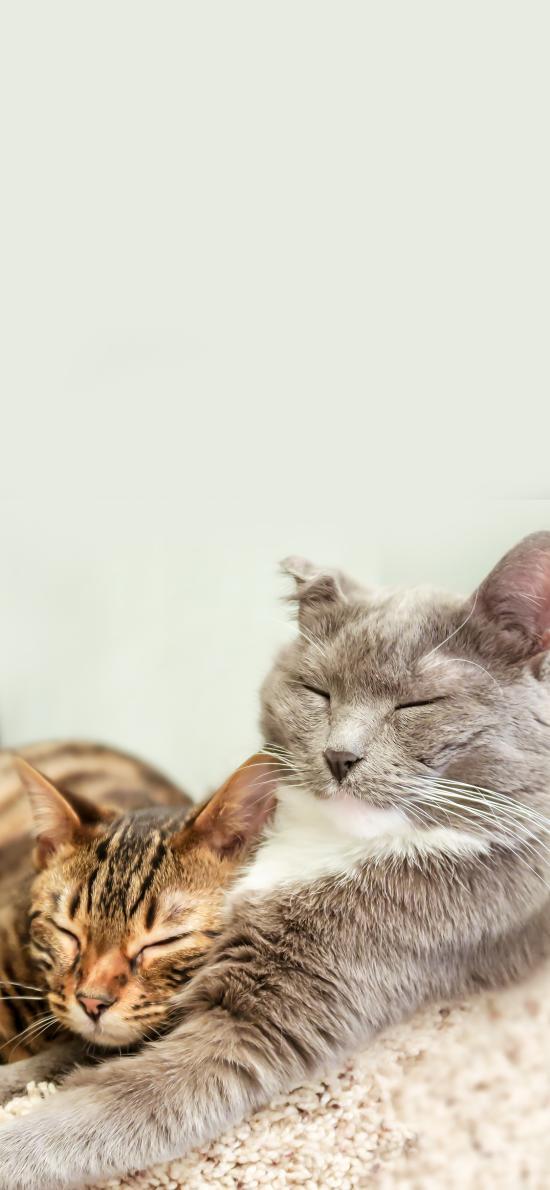猫咪 宠物 眯眼 休憩
