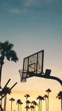 体育 篮球 球场 运动 椰树 树木