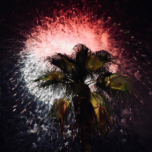 夜晚 棕榈树 烟花 绚丽 庆祝