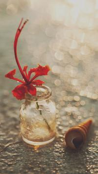 静物 海螺 玻璃瓶 鲜花
