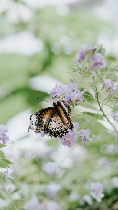蝴蝶 昆虫 小花 采蜜