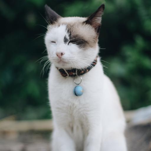 猫咪 白猫 宠物