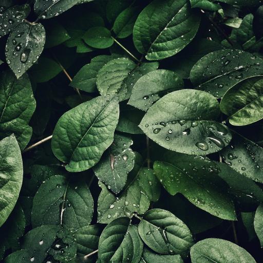 枝叶 绿植 绿叶 密集