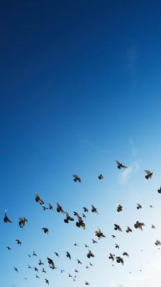 鸟 飞翔 蓝天 太空 翅膀