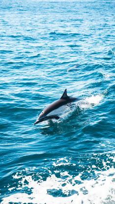 海豚 海洋 海浪 跳跃