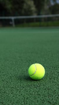 网球 运动 球场 草坪 绿色